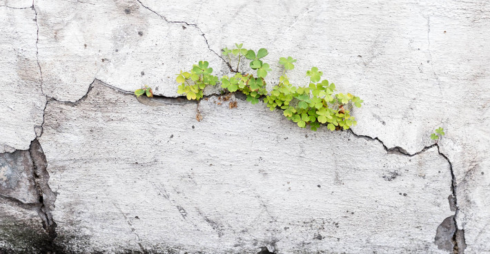 Plant growing in cracked wall, Acton
